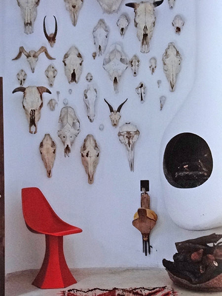 Collection of animal skulls on a wall