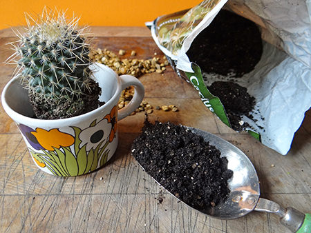 Vintage floral cup with middle layer of special cactus compost