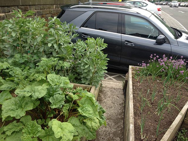 Incredible Edible rhubarb, peas, onions and chives growing in Todmorden Train Station car park