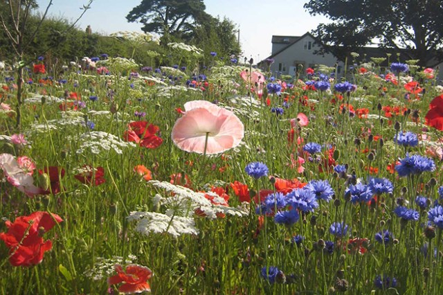 Garden with wild flower meadow