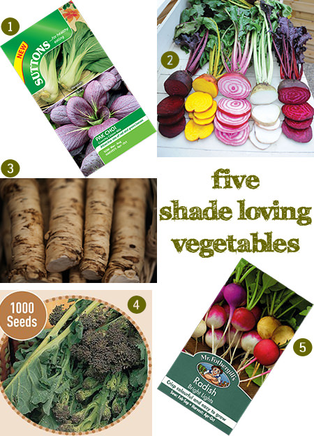 selection of 5 shade loving vegetables | H is for Home | #gardening #allotment #seeds