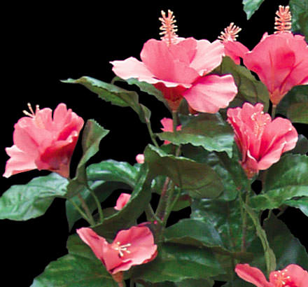 Pink artificial hibiscus flowers