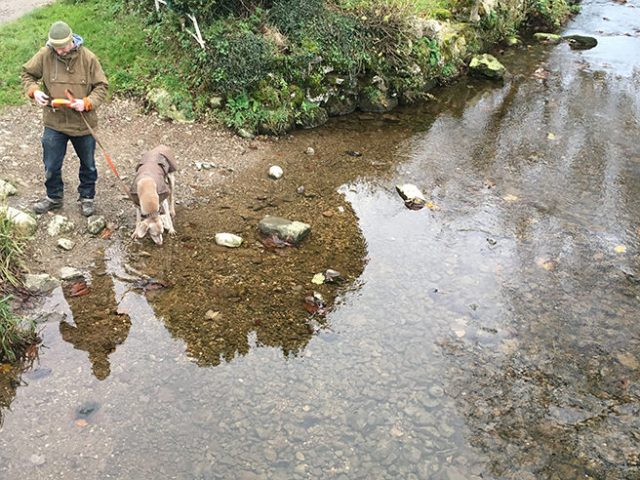 Fudge drinking from Malham Beck | H is for Home