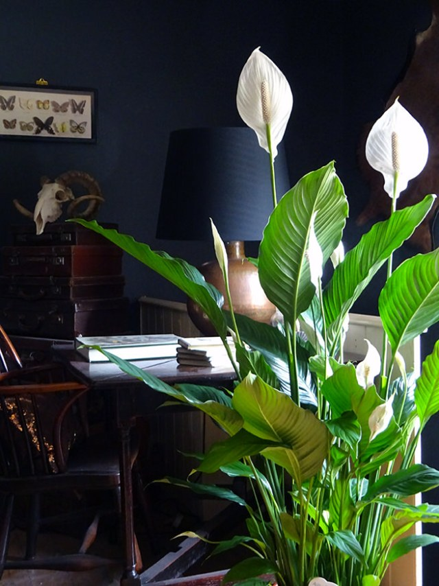 Peace lily in our top-floor bedroom | H is for Home
