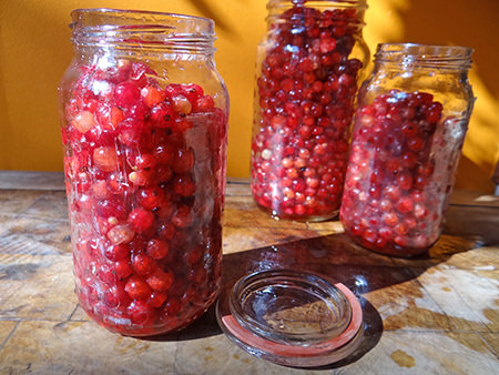 Washed redcurrants put into glass jars