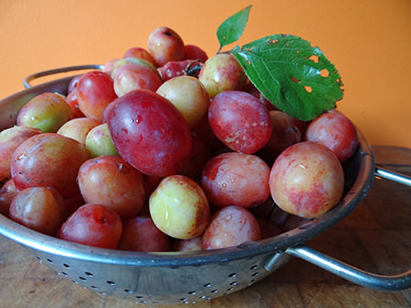 washed plums in an aluminium colander