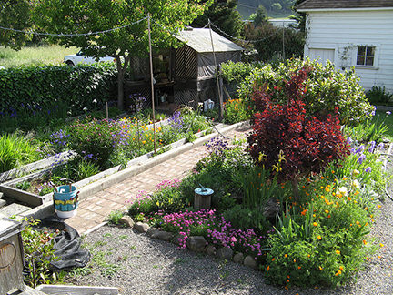 Cottage garden with borders, paths and shed