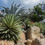 Beautify your Palm Springs property for a quick sale with these healthy desert plants