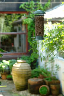 hanging bird feeder full of peanuts | H is for Home