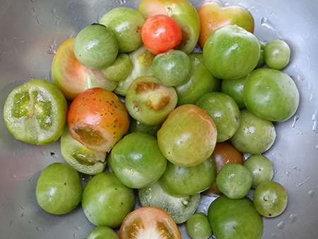 colander of green tomatoes