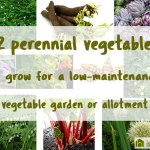 12 perennial vegetables to grow for a low-maintenance allotment