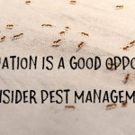 Why renovation is a good opportunity to consider pest management
