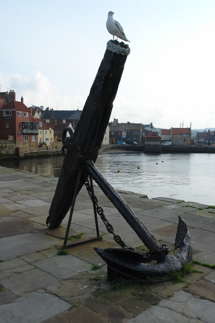 Seagull perched on an anchor, Whitby | H is for Home