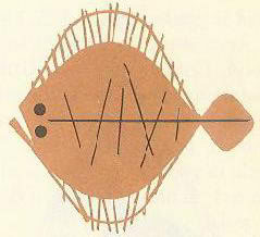 Charley Harper illustration of a flat fish