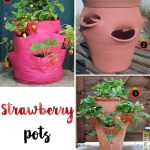 Price Points: Strawberry pots
