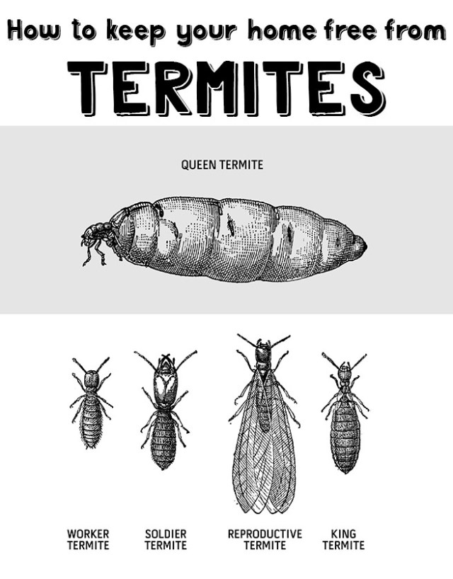 How to keep your home free from termites