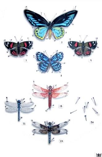 Specimen Numero 24