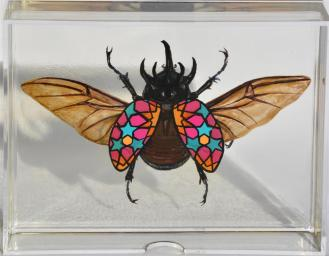 Zillij Beetle