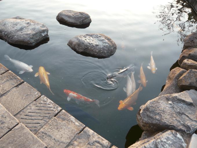 グラバー園鯉