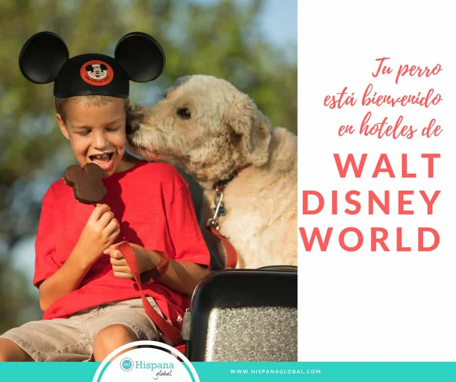 Puedes llevar a tu perro a ciertos hoteles de Walt Disney World Resort en Orlando