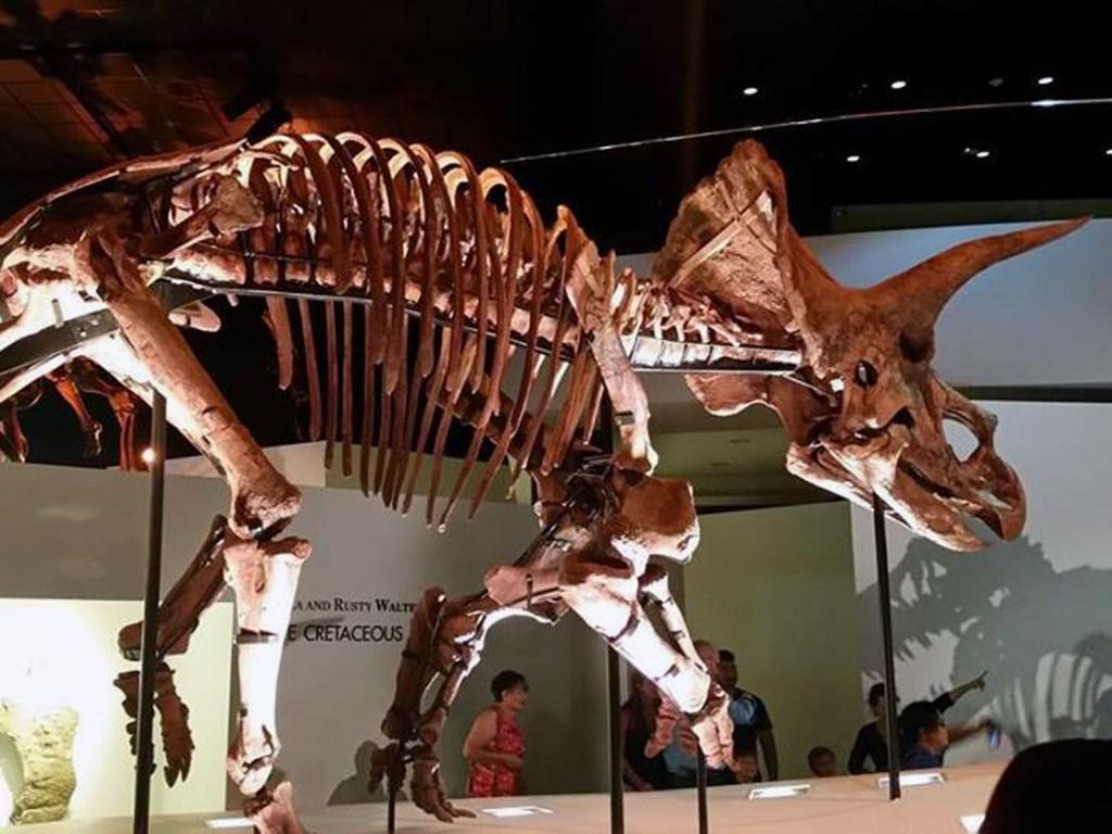 hmns dinosaur 1