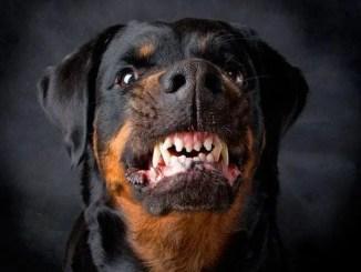 No hay cosa que me dé más rabia que ser mordido por un perro