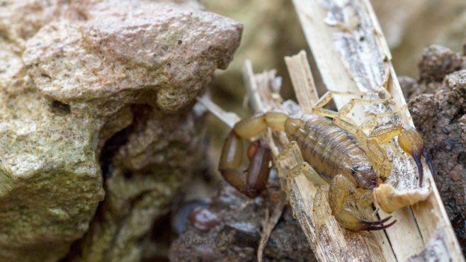 skorpion_20131116_1131866061-78