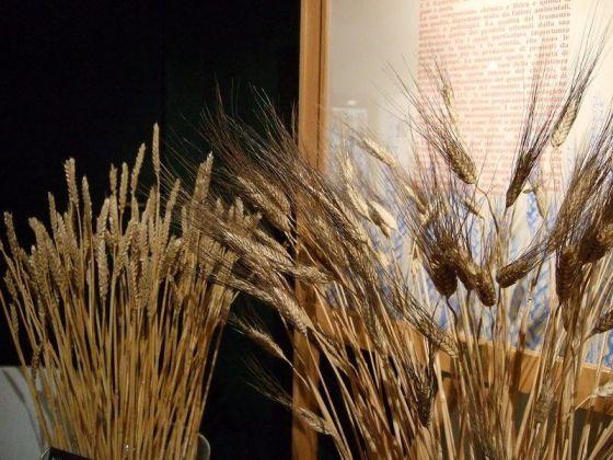blé tendre blé dur