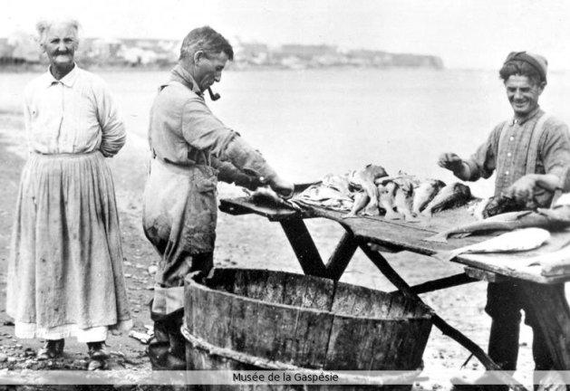 Le tranchage de la morue sur la grave. Source : Musée de la Gaspésie, Collection Marcel Lamoureux.
