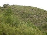 Anciennes terrasses de culture à Pezilla de Conflent, sur une pente à 32 %. Sortie direction Prats par la piste revêtue.