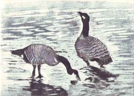 geese-2c