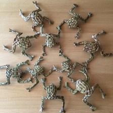 rush-frogs