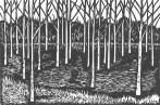 himalayan-birches