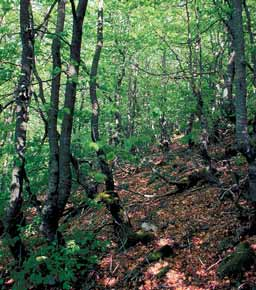 AtlasForestal_CastillayLeon_Bloque2_Página_155_Imagen_0003