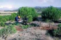 Trabajos de inicio de ejecución del clareo acompañados de poda muy ligera, en el M.U.P. nº 133 «El Guardián» en Mojados (Valladolid).