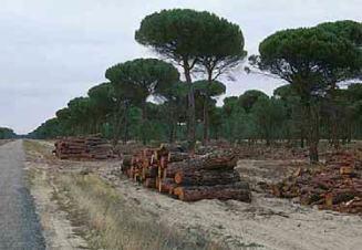 La ejecución de tratamientos culturales y las cortas generan, además de la madera, una serie de restos gruesos (leñas) que pueden tener valor comercial para utilizarlos como biocombustibles o en las industrias de desintegración. Carretera forestal de Viana de Cega a Alcazarén (Valladolid).