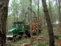Desembosque de la madera previamente apilada mediante un autocargador por una calle de saca. Esta labor, que se realiza con varios tipos de maquinaria (tractores agrícolas adaptados, skidders y autocargadores), tiene como finalidad transportar las trozas hasta un lugar accesible para la extracción con camión. Sierra de la Culebra (Zamora).