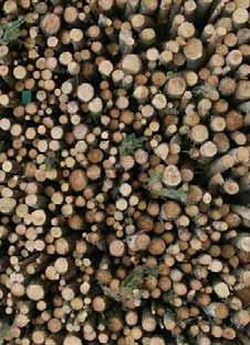 AtlasForestal_CastillayLeon_Bloque3_Página_034_Imagen_0004