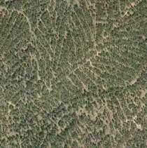 Tomo+II.+Futuro+de+los+bosques+y+Mapa+Forestal+_Página_113_Imagen_0003