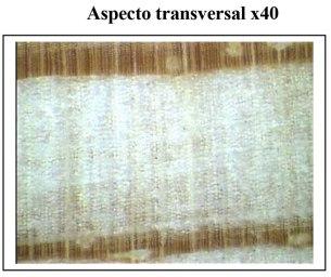 ASR002002-3