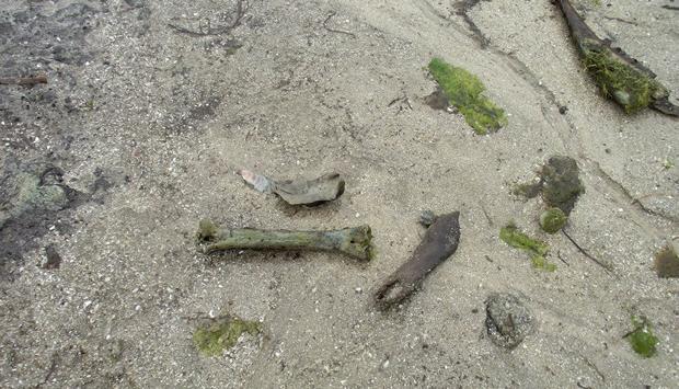 Restos de osos en Guidoiro Areoso / www.manuelgago.org