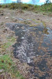Desperfectos no petróglifo Chan do Carbón 3, no entorno de Campo Lameiro / A Forneiriña