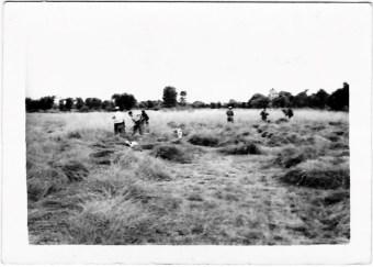 A familia Joga Barge segando a herba nos Cobos
