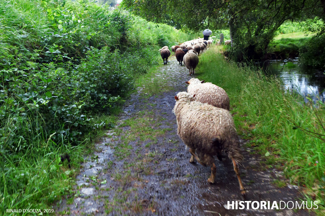 Read more about the article Finding the Lost Sheep at Christmas