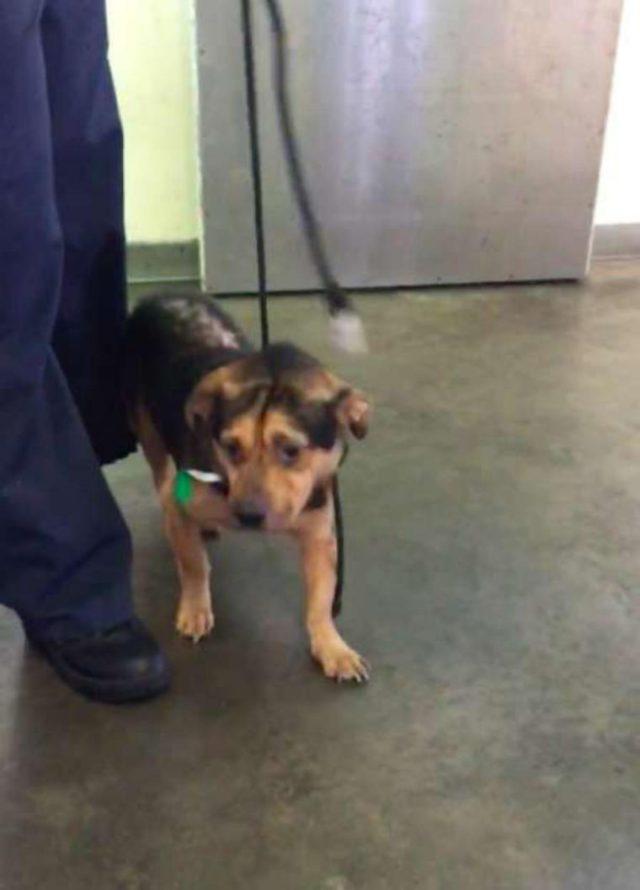 Casal vê foto do cão mais triste do abrigo e dirige 6 horas para o adotar 3