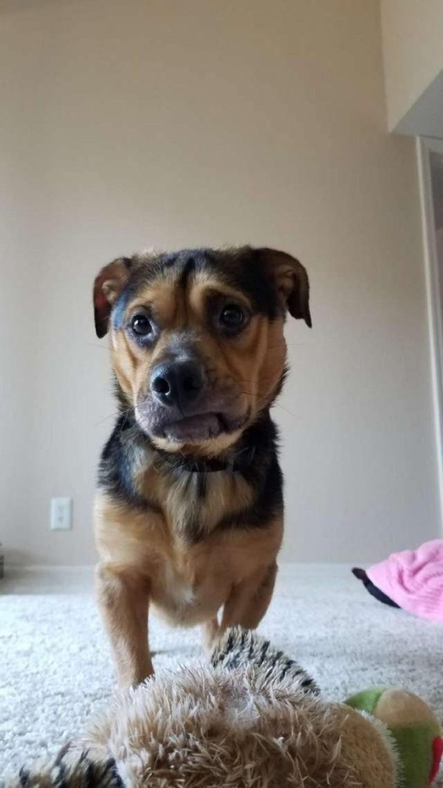 Casal vê foto do cão mais triste do abrigo e dirige 6 horas para o adotar 4