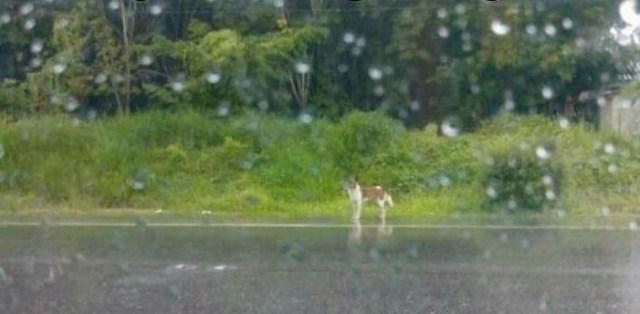 Cão comove a Internet por se recusar a deixar o local onde foi abandonado pelo dono 2