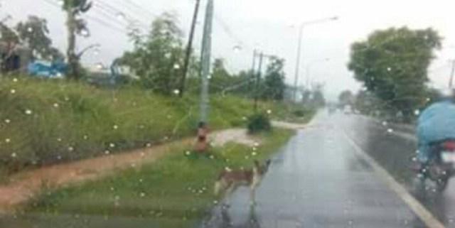 Cão comove a Internet por se recusar a deixar o local onde foi abandonado pelo dono 3