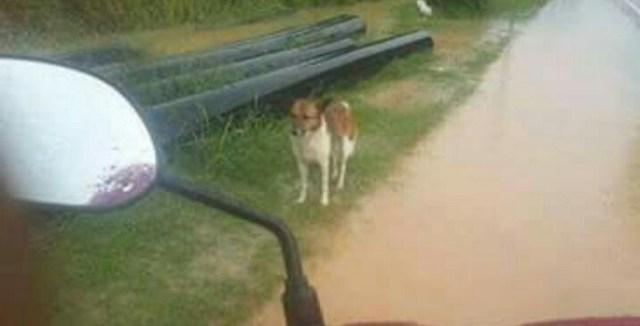 Cão comove a Internet por se recusar a deixar o local onde foi abandonado pelo dono 6