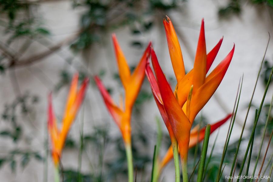 21-decoracao-jardim-quintal-casa-plantas-flores
